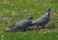 Ptaki w parku zdrojowym
