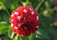 Kwiaty w parku uzdrowiskowym
